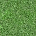 Green grass - 01